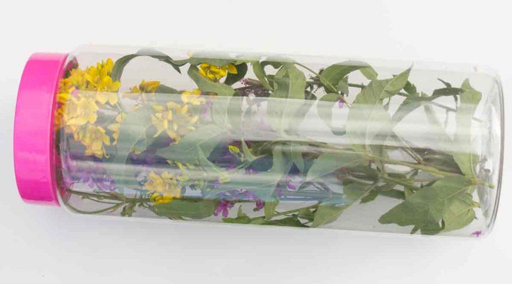 Caja limneana con plantas en el interior