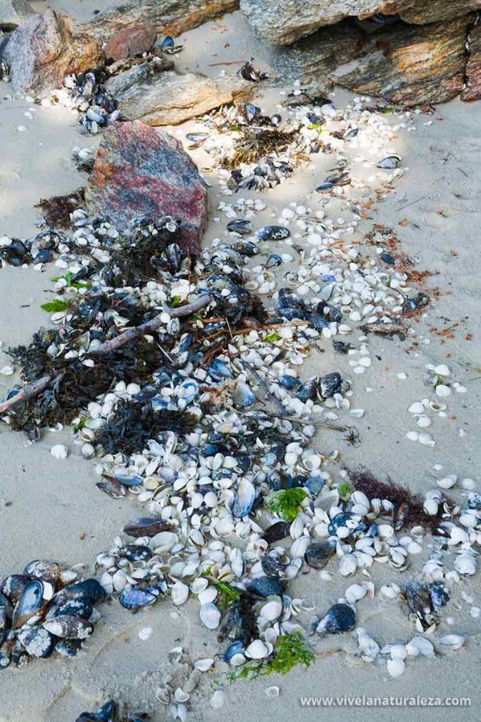 Las conchas arrastradas a la playa por la marea enriquecerán nuestra colección