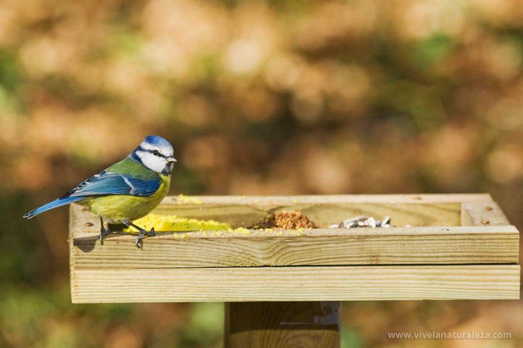 pájaro en un comedero