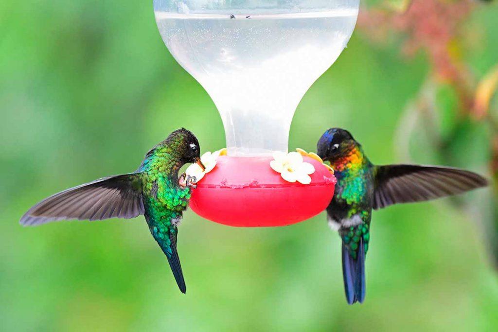 Bebedero para colibrí picaflor para el jardín