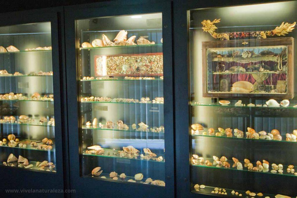 Colección de conchas exóticas expuestas tras una vitrina