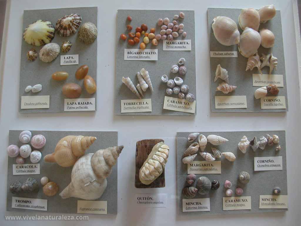 Colección de conchas expuestas sobre una mesa