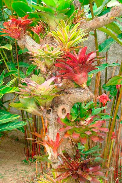 plantas que retienen agua