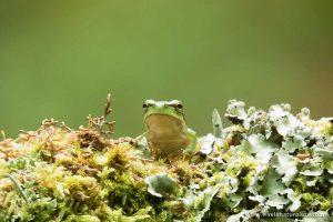 Técnicas fotográficas para la fotografía de anfibios y reptiles