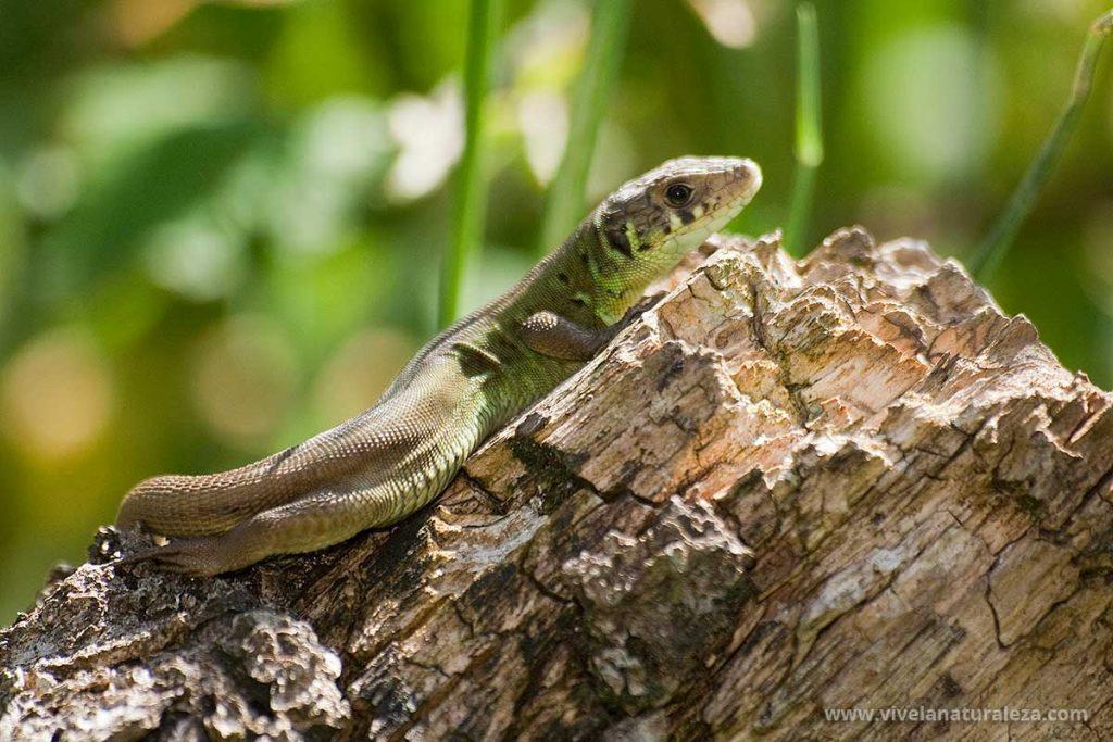 Fotografía de reptiles.
