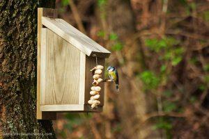 Caja mido o casita para pájaros de fabricación casera.