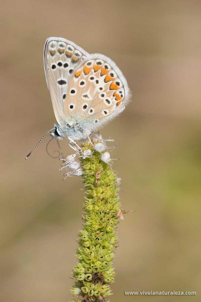Al hacer fotos de mariposas probaremos también el formato vertical