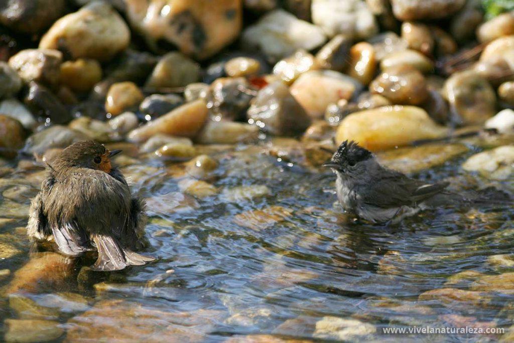fotografía de pájaros bañándose