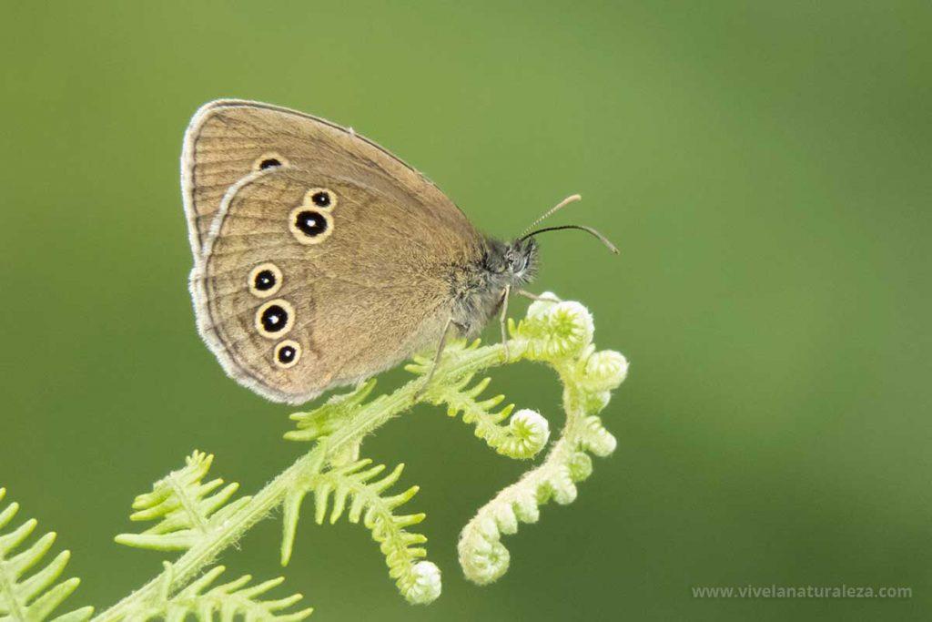 Fotografia de mariposa con el fondo desenfocado