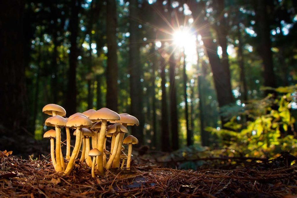 fotografía de setas en el bosque