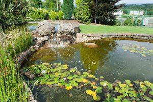 Cómo construir un estanque casero en tu casa y llenarlo de plantas y animales, nenúfares, ranas, peces, etc.