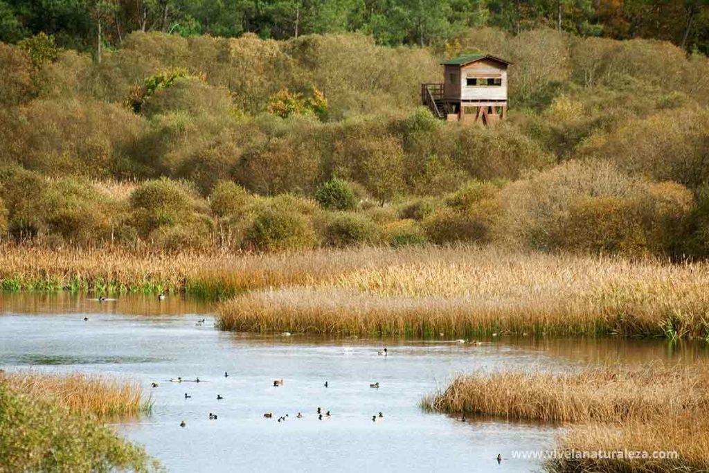 Como observar aves usando observatorios de lagunas