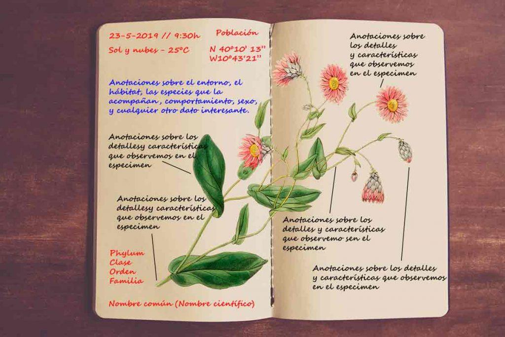 Modelo de un cuaderno de campo