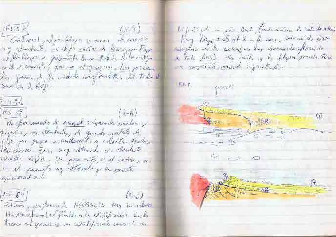 Ejemplo de cuaderno de campo