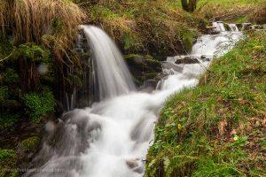 Los ecosistemas acuáticos. Las aguas corrientes: ríos y lagos. Las aguas estancadas: lagos, lagunas, estanques. Estudio, fauna y flora.