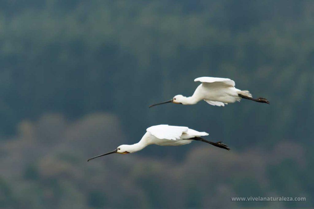 Pájaros fotografiados volando