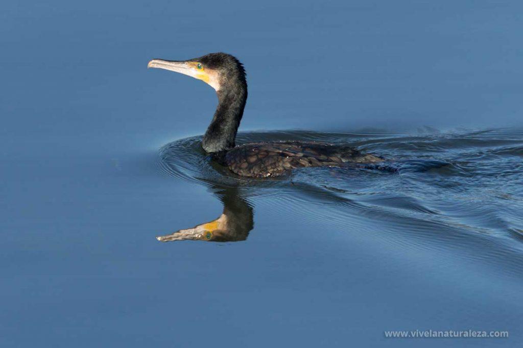 Los sistemas de los fotógrafos profesionales para hacer las mejores fotografías de aves