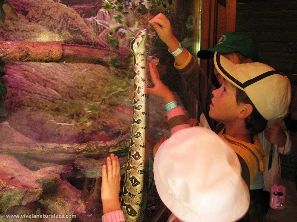 Niños en un zoologico
