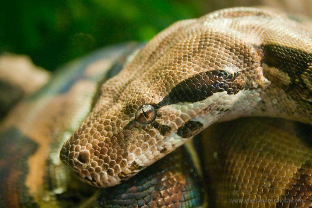 En los zoologicos se pueden fotografiar animales exoticos como esta serpiente