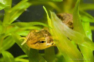 Técnicas de fotografía con las que podrás fotografiar fauna de pequeño tamaño con decorados que imitan su hábitat natural