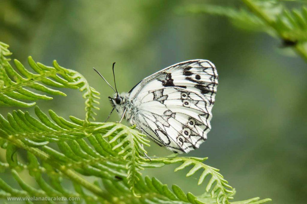 Las fotografías de mariposas nunca han sido tan fáciles con este tutorial