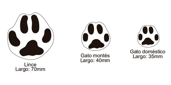 huellas de animales en español de España