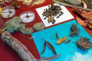El laboratorio de ecología de un naturalista aficionado es la habitación donde expone sus descubrimientos, investigaciones, hallazgos y colecciones