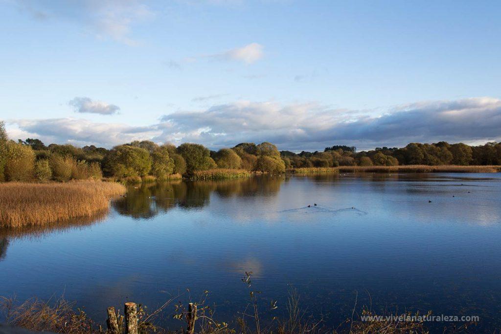 La ruta de senderismo que rodea la laguna y pasa por los observatorios ornitológicos permite a los ornitólogos disfrutar de las aves que viven aquí