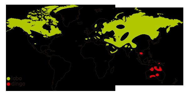 Mapa de distribucion mundial del lobo
