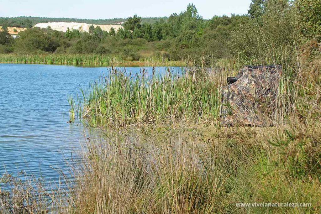 Como observar aves en una laguna con ayuda de un hide