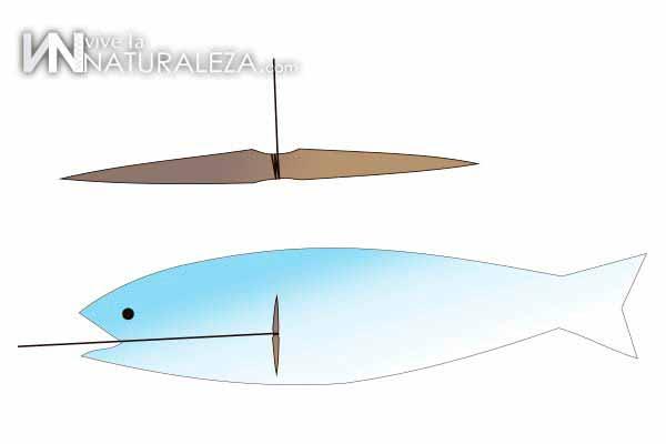 Anzuelo improvisado para pesca de supervivencia