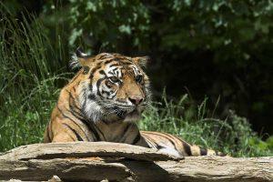 Los zoos son buenos lugares para hacer fotos de fauna exótica que de otro modo no estaría a nuestro alcance