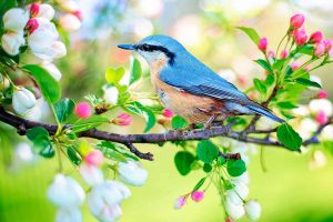 Guía de la naturaleza de Aves