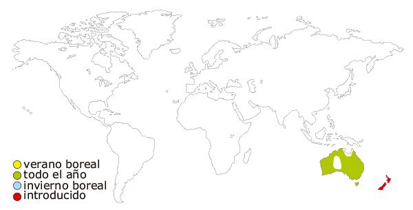 Mapa de distribucion mundial del pájaro cisne negro (Cygnus atratus)