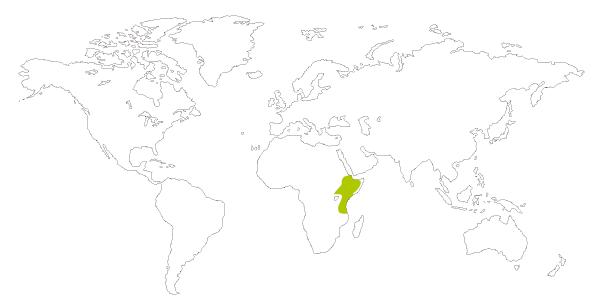Mapa de distribución mundial del estornino soberbio (Lamprotornis superbus o Spreo superbus)