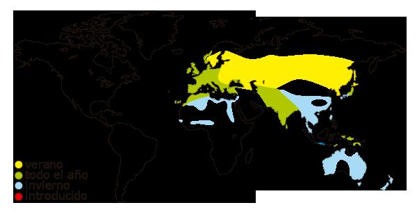 Mapa de distribucion mundial de la focha comun (Fulica atra)