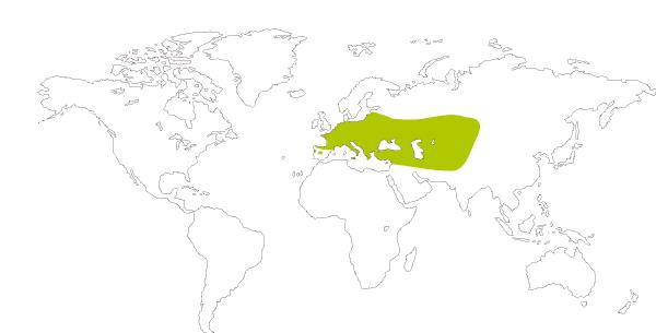 Mapa de distribución mundial de la mariposa manto oscuro (Lycaena tityrus = Heodes tityrus)