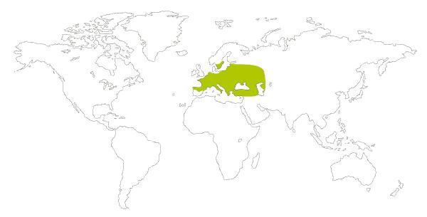 Mapa de distribucion mundial de la mariposa ninfa perlada o mancha leonada (Coenonympha arcania)