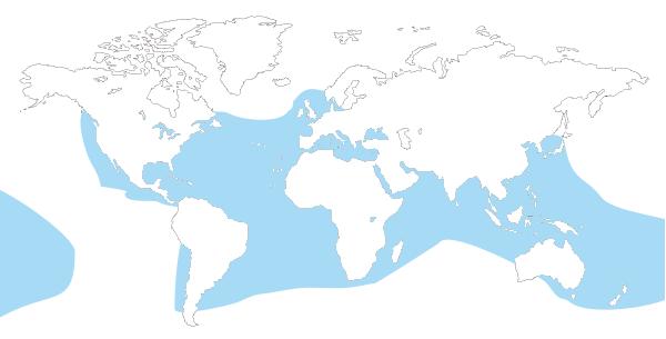 Mapa de distribucion mundial de la tortuga boba (caretta careta)