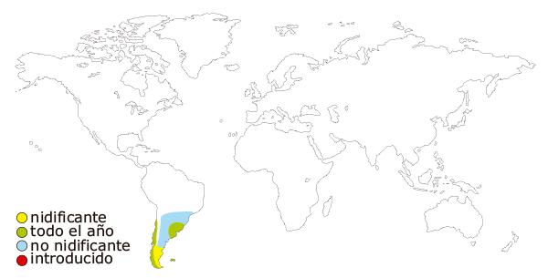 Mapa de distribucion mundial del cisne de cuello negro o cisne cuellinegro (Cygnus melancoryphus)