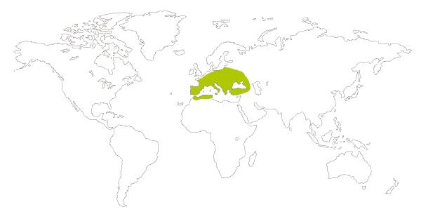 Mapa de distribución mundial de la mariposa satiro moreno (Hipparchia statilinus, Neohipparchia statilinus)