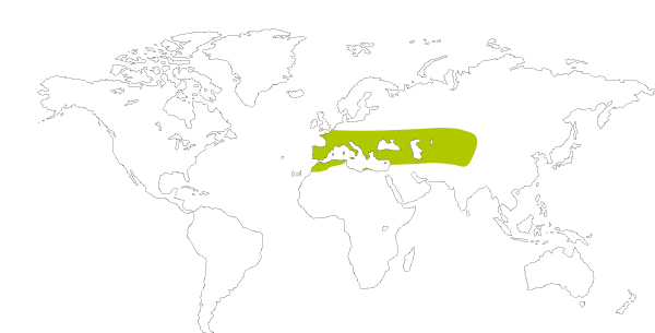 Mapa de distribución mundial de la mariposa piquitos castaña (Carcharodus alceae)