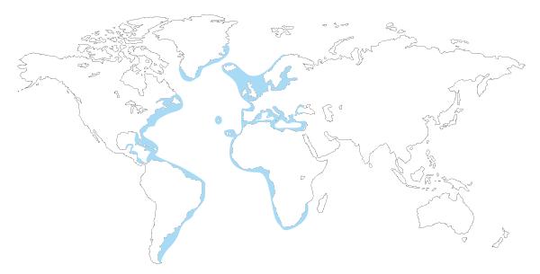 Mapa de distribución mundial de la cherna (Polyprion americanus, P. americanum)