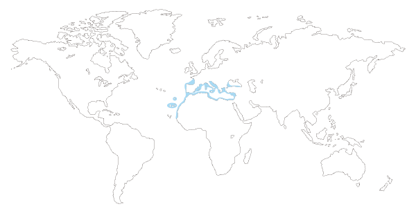 Mapa de distribución de la mojarra pez (Diplodus vulgaris)
