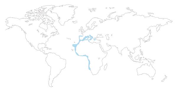 Mapa de distribución mundial del pez guitarra (Rhinobatos rhinobatos)