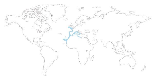 Mapa de distribución mundial de la raya mosaico (Raja undulata)