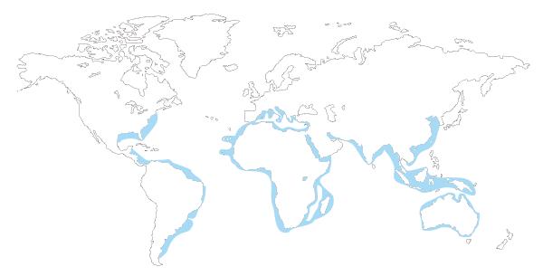 Mapa de distribucion mundial del tiburon toro (Carcharias taurus, odontaspis Taurus, Eugomphodus Taurus)