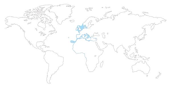 Mapa de distribución mundial de la Jibia, cachon, choco o sepia (Sepia officinalis)